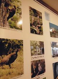 沖縄写真展