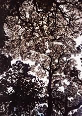 香取神宮森の葉