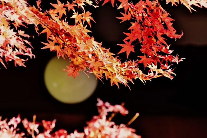灯りと紅葉