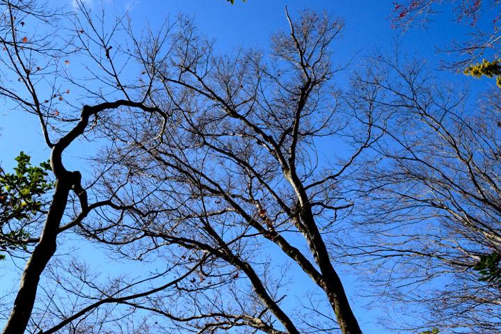 ダンスの木