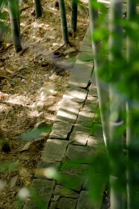 竹林と石畳