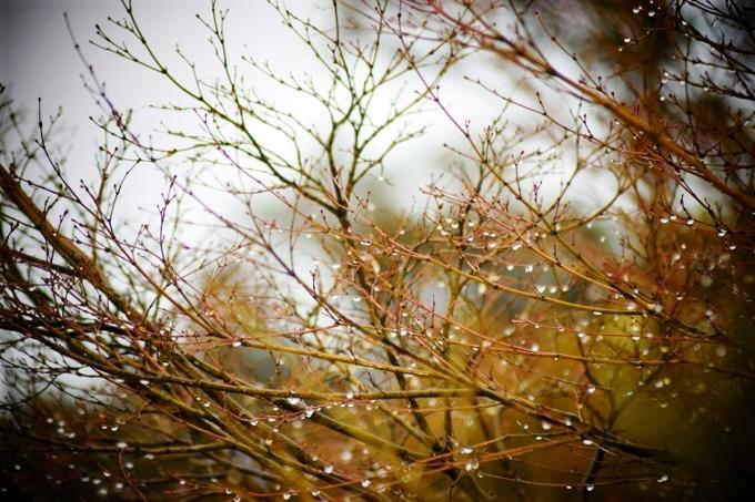 チラッと雨