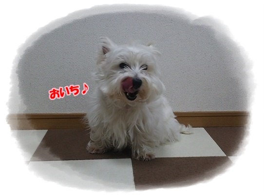 azukiai6_20161230224309fdc.jpg