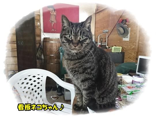 cafe13_20170208003238444.jpg