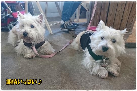 cafe1_20170207194252dc8.jpg