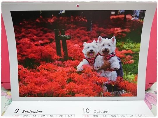 calendar5_20170114233443e91.jpg