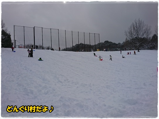 dongurimura1.jpg