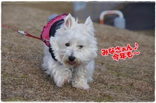 park6_20161231152308e7e.jpg