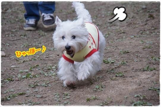 run2_20161207193843efb.jpg