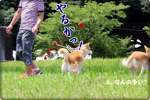 s-himawari161124-1ーIMG_4043