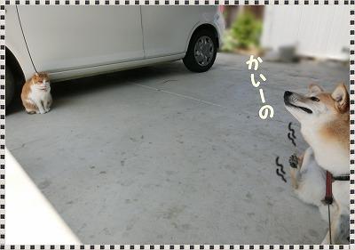 s-ume2161225-CIMG8763