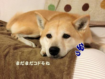 s-soba170107-CIMG0061
