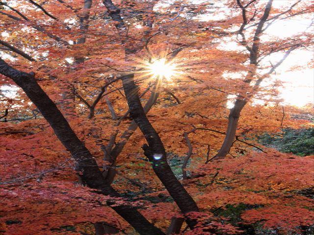 nagayama-16-12_048_R.jpg