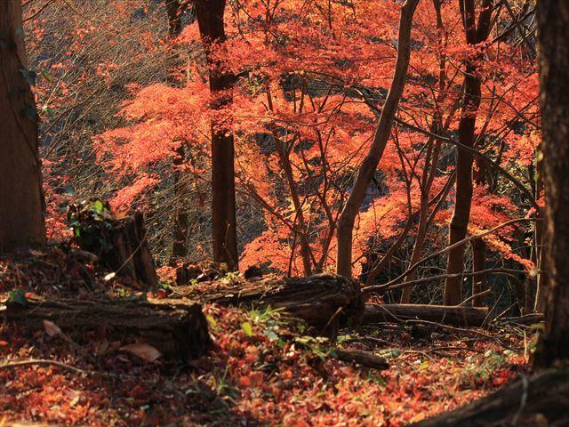 nagayama-16-12_156_R.jpg