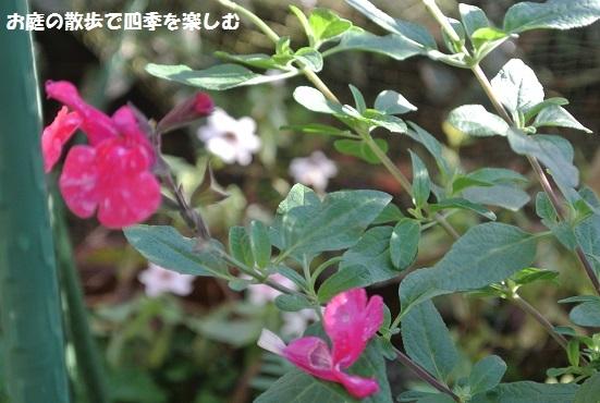 niwa187.jpg