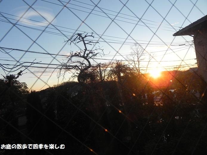 niwa202.jpg
