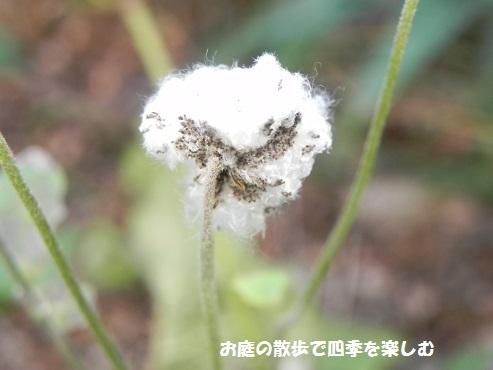 niwa203.jpg