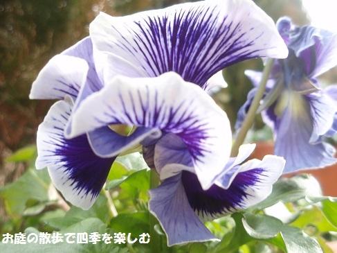 niwa205.jpg