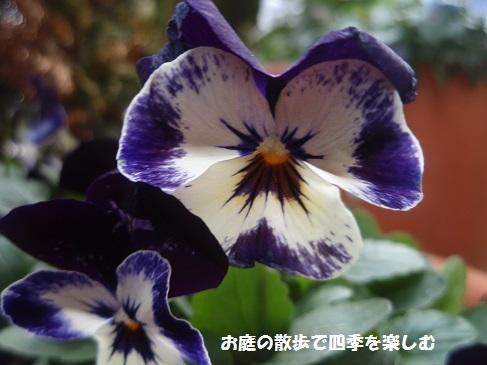 niwa206.jpg