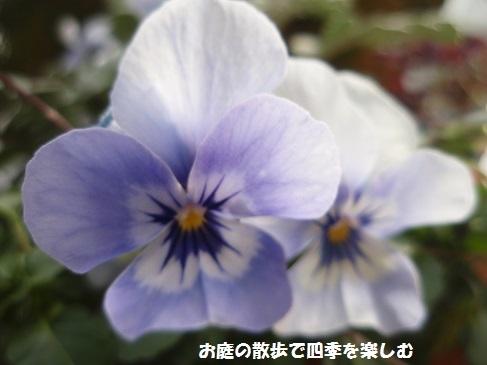 niwa207.jpg