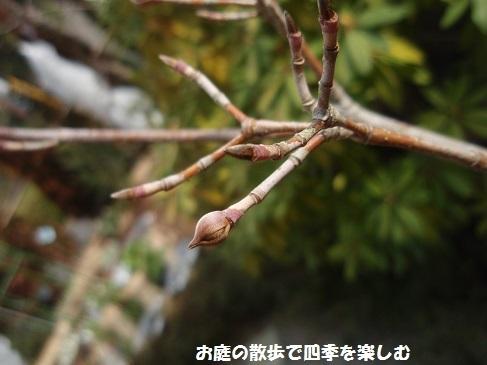 niwa209.jpg