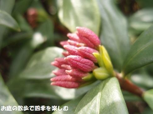 niwa210.jpg