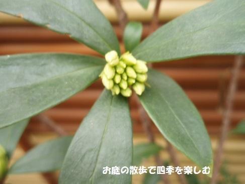 niwa213.jpg