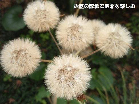 niwa215.jpg