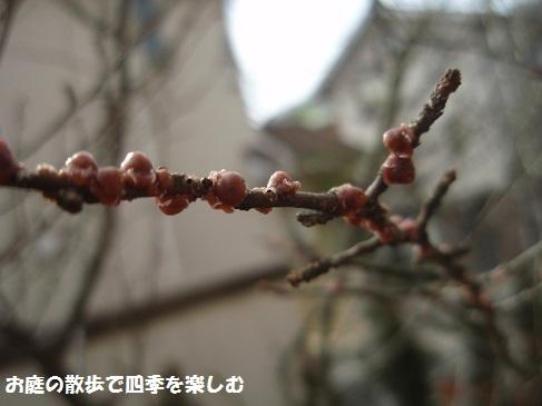 niwa216.jpg