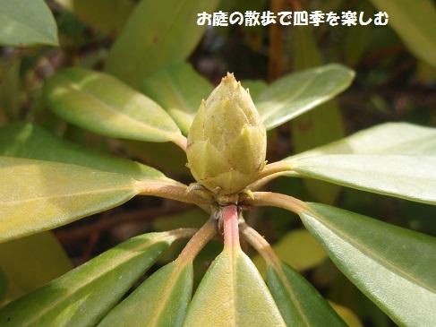 niwa219.jpg