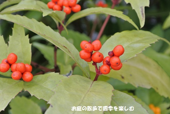 senryou2_20161219144035228.jpg