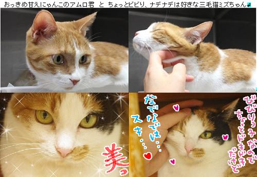 amuromizu_20170124073245750.png