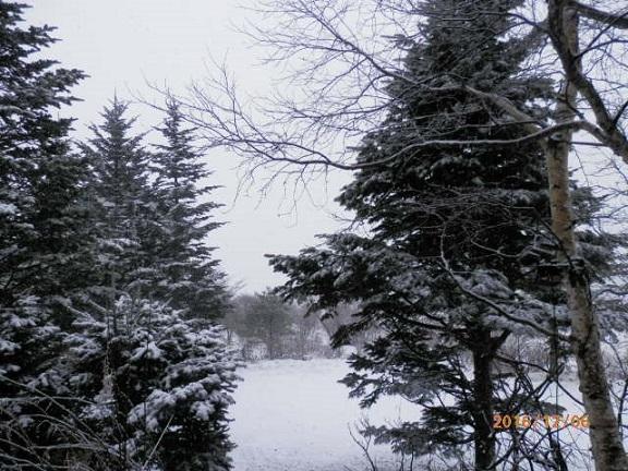 雪降り 12/6