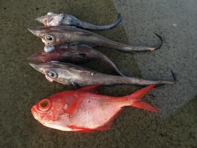 1月12日のWILDCAT釣果 キンメダイとトウジン