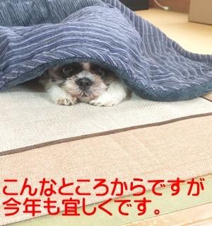 IMG_4176-b10