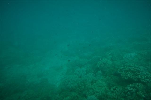 那覇 水中観光船(3)
