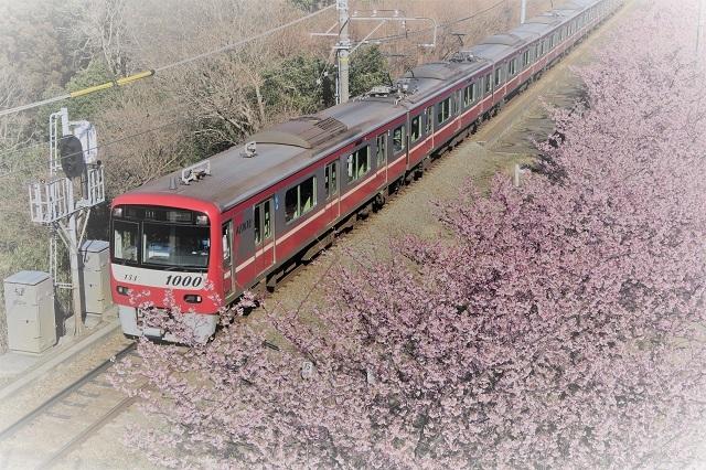 2017三浦海岸さくら祭り 京急と桜(1)