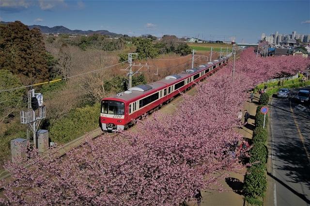 2017三浦海岸さくら祭り 京急と桜(2)