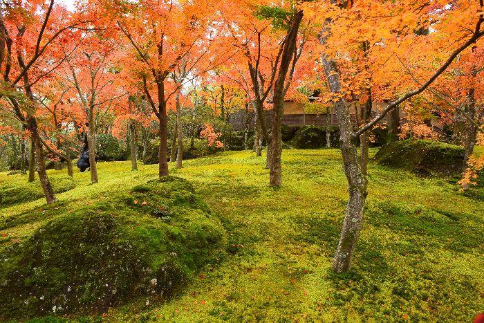 100-苔庭-紅葉