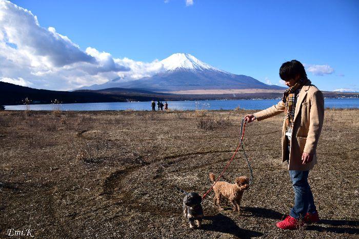 151-New-Emi-山中湖畔からの富士山と愛犬