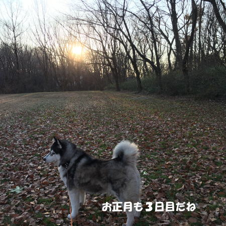 2017-01-03_9.jpg