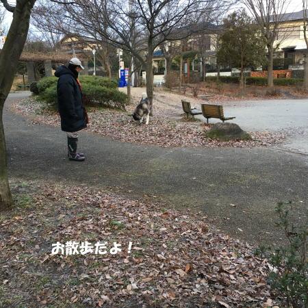 2017-01-09_1.jpg