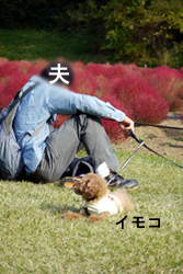 bee-kochia1608.jpg