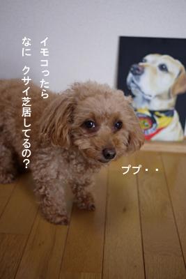 bee-musashi03.jpg