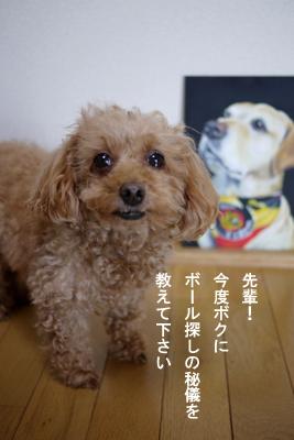 bee-musashi04.jpg