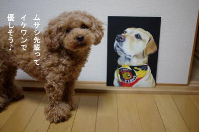 bee-musashi05.jpg