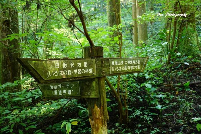 bee-高尾山いろはの森2057