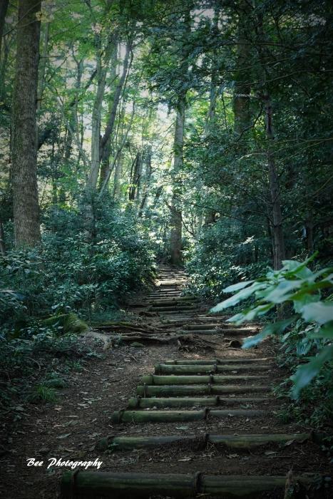 bee-高尾山いろはの森2076