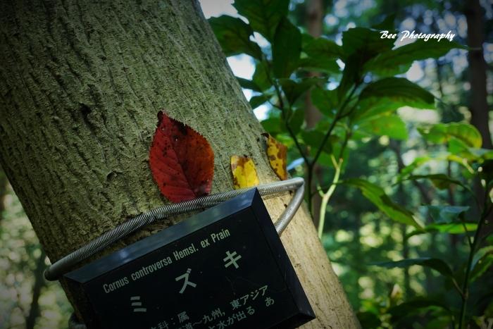 bee-高尾山いろはの森2089
