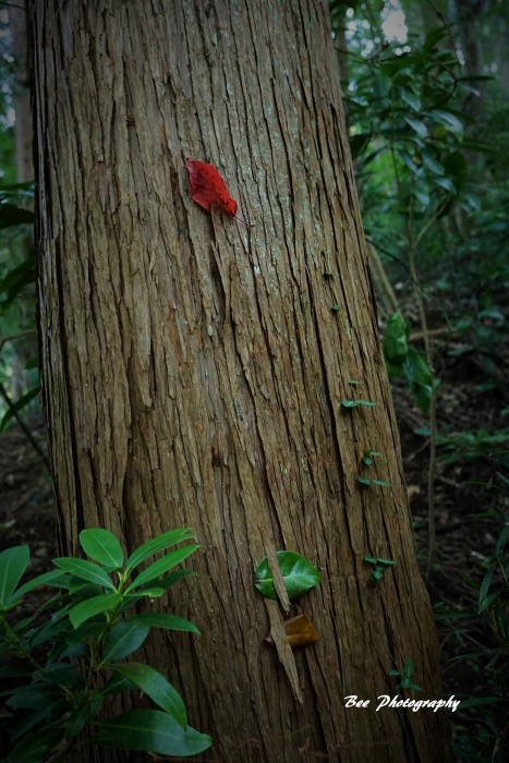 bee-高尾山いろはの森2095